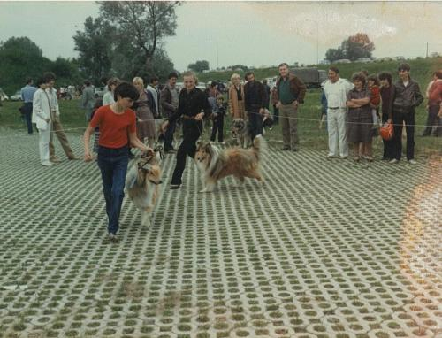 CAC 1984.