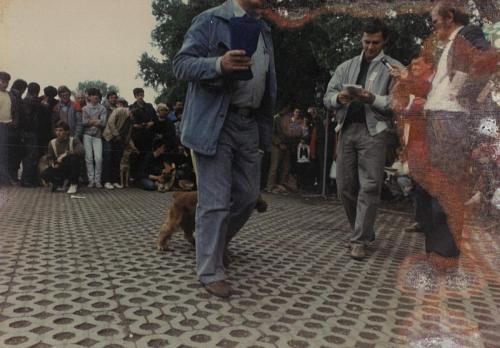 CAC 1986.