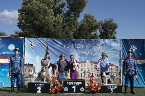 CACIB Osijek 15.09.2018.  Postolje 13