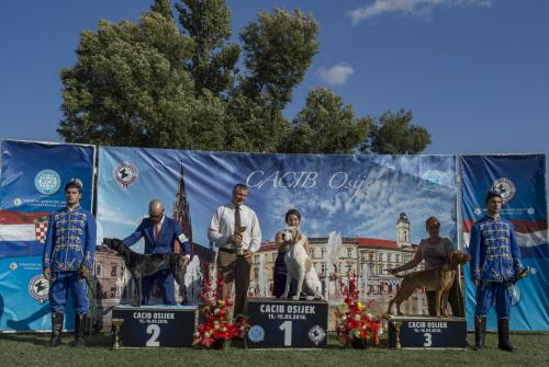 CACIB Osijek 15.09.2018.  Postolje 17