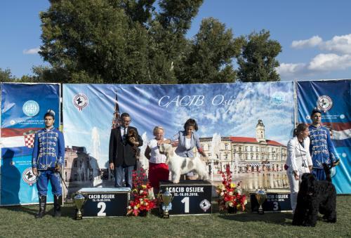 CACIB Osijek 15.09.2018.  Postolje 21 b