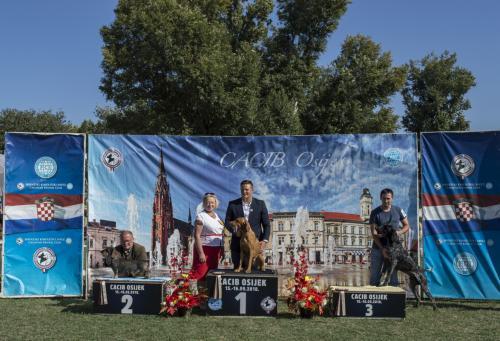 CACIB Osijek 15.09.2018.  Postolje 8