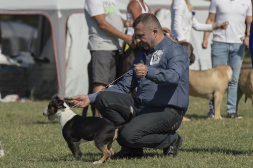 CACIB Osijek 16.09.2018. 28