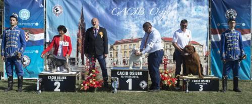 CACIB Osijek 16.09.2018. Postolje B 11