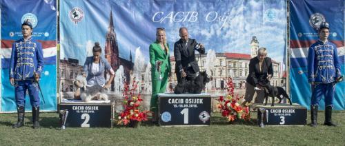 CACIB Osijek 16.09.2018. Postolje B 12