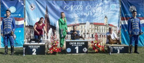 CACIB Osijek 16.09.2018. Postolje B 13