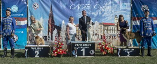 CACIB Osijek 16.09.2018. Postolje B 14
