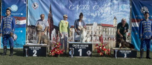 CACIB Osijek 16.09.2018. Postolje B 15