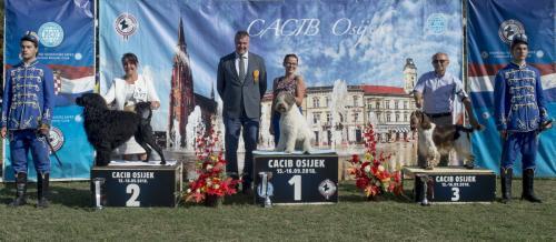 CACIB Osijek 16.09.2018. Postolje B 17