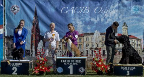 CACIB Osijek 16.09.2018. Postolje B 2