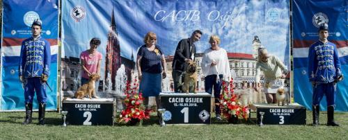 CACIB Osijek 16.09.2018. Postolje B 3