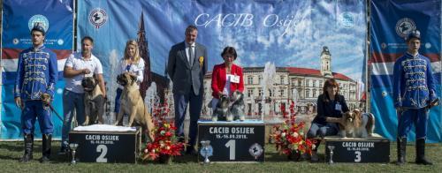 CACIB Osijek 16.09.2018. Postolje B 5