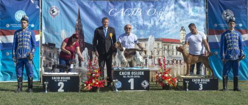 CACIB Osijek 16.09.2018. Postolje B 7