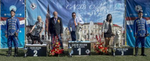 CACIB Osijek 16.09.2018. Postolje B 8